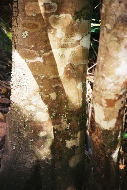 treetrunks.JPG